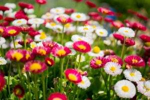 colorful-colourful-flowers-909-826x550